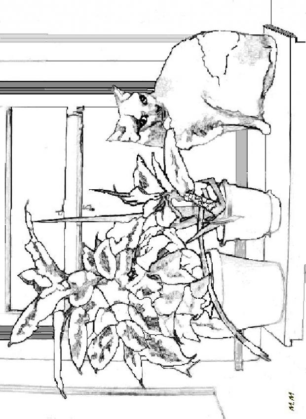 Cat On The Edge Of The Window Coloring Pages Hellokids Com