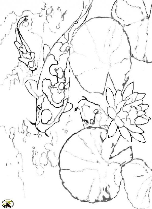 trigger fish coloring pages - photo#22