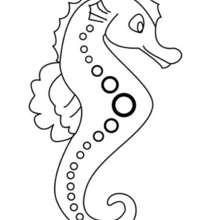 Seahorse Coloring Pages Hellokids Com