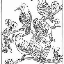 Bird Group Coloring Pages Hellokids Com