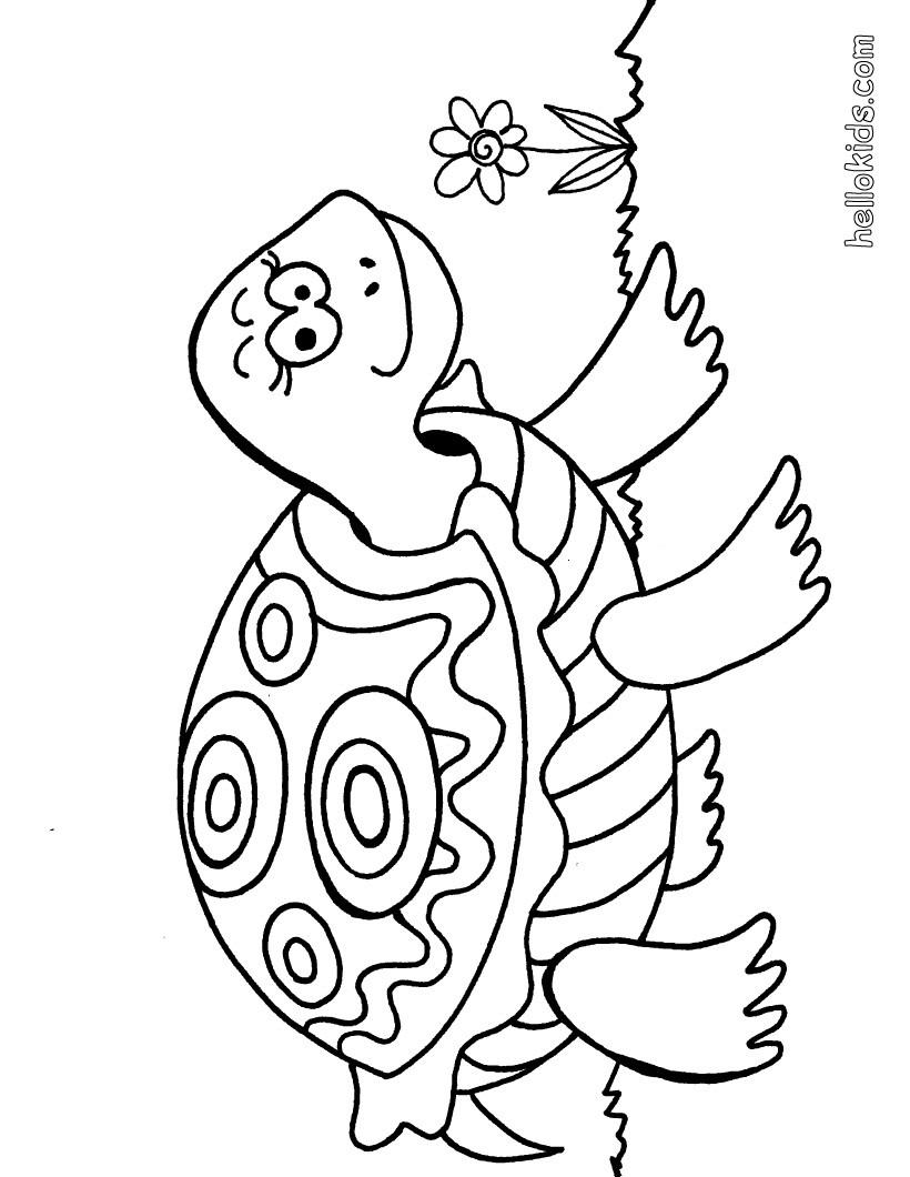 coloring pages turtles - turtle coloring pages turtle