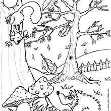 Squirrel And Hedgehog Coloring Pages Hellokids Com