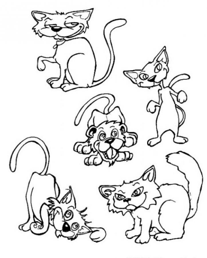 Cat Coloring Pages Find The Intruder