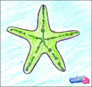 how to draw a sea star step by step