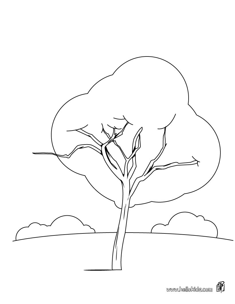 How To Draw A Maple Tree Group Picture Image By Tag Maple Tree Coloring Page