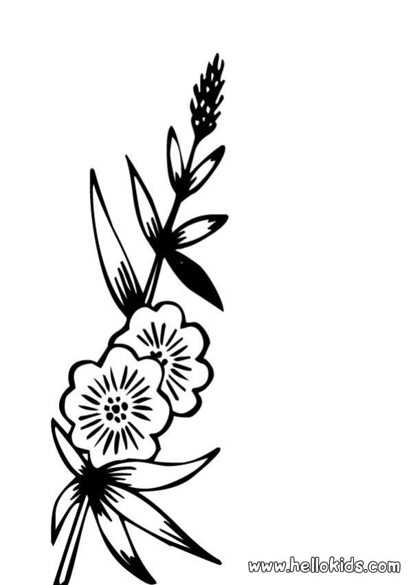 A0KTeacher Stuff, Coloring Pages, Butterfly and other Coloring