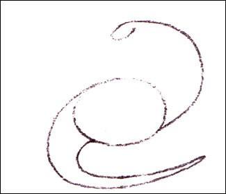 diplodocus-step2