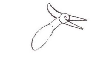 pteranodon-step2