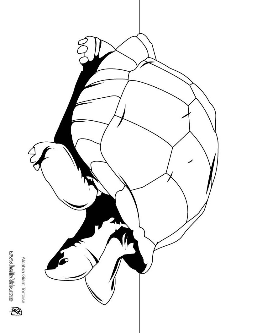 galapagos coloring pages turtle | TORTOISE coloring pages - Aldabra giant tortoise