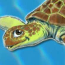 NEW ! Turtle and tortoise coloring pages