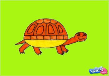 dessin tortue