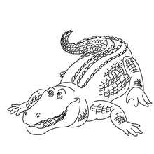 Alligator Coloring Pages Hellokids Com Aligator Coloring Pages