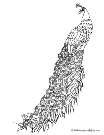 Peafowl coloring pages Hellokids