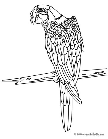 Macaw coloring pages  Hellokidscom