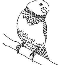 Parakeet Coloring Pages Hellokids Com