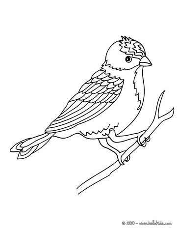 Bird sitting on a branch coloring pages - Dessin perruche ...