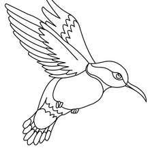 Parakeet coloring pages  Hellokidscom
