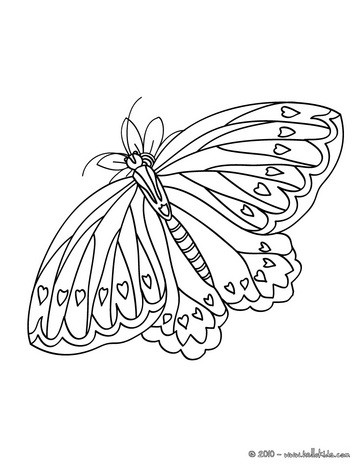 BUTTERFLY coloring pages - 43 ANIMALS of the world coloring books ...