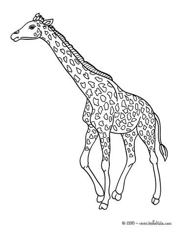 Giraffe coloring pages  Hellokidscom