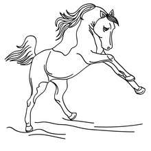Wild horse to color in - Coloring page - ANIMAL coloring pages - FARM ANIMAL coloring pages - HORSE coloring pages - WILD HORSE coloring pages
