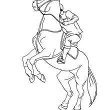 Man training a horse