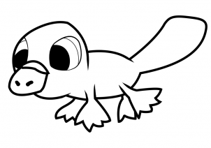 How to draw how to draw a platypus for kids for Duckbill platypus coloring page