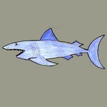 TERRIFIC SHARK