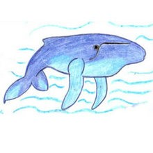 How To Draw Sea Animals Easy Step By Step Drawing Tips For Kids