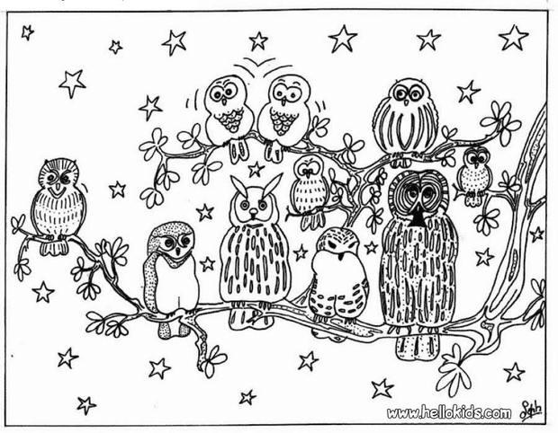 Owls coloring pages - Coloriage de hiboux ...