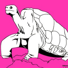 TORTOISE coloring pages