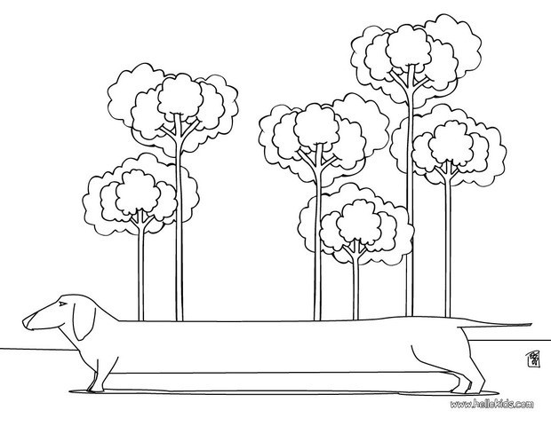 dachshund puppies coloring pages - photo#33