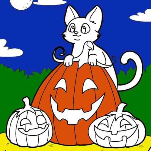 Cat, Pumpkin, Halloween