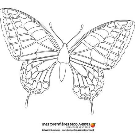 Tiger swallowtail butterfly coloring page - photo#22