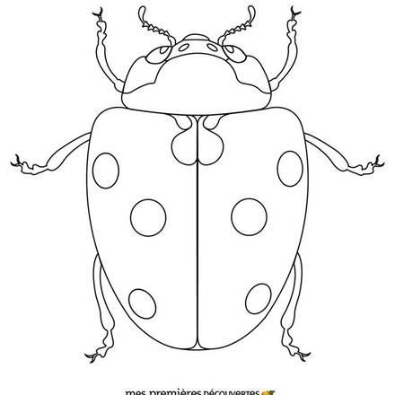 Ladybug drawings for kids - photo#21