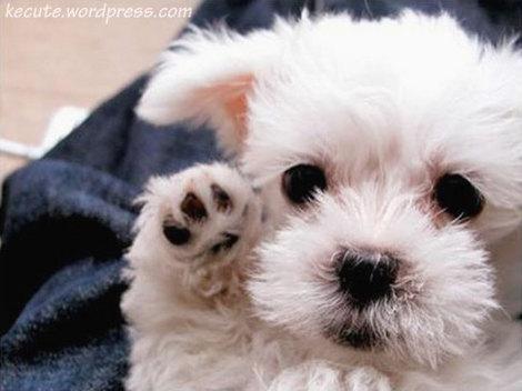 Baby Puppies on Baby Puppies Lft Jpg