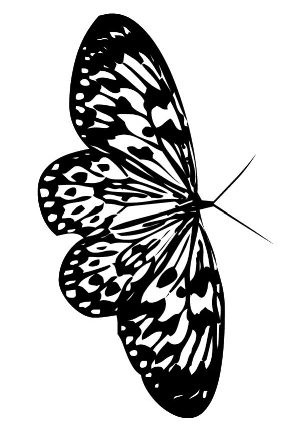 small butterfly beautiful butterfly coloring page coloring page animal coloring pages insect coloring pages