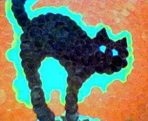 le-chat-de-catkara